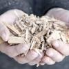 Biomasseverwertung